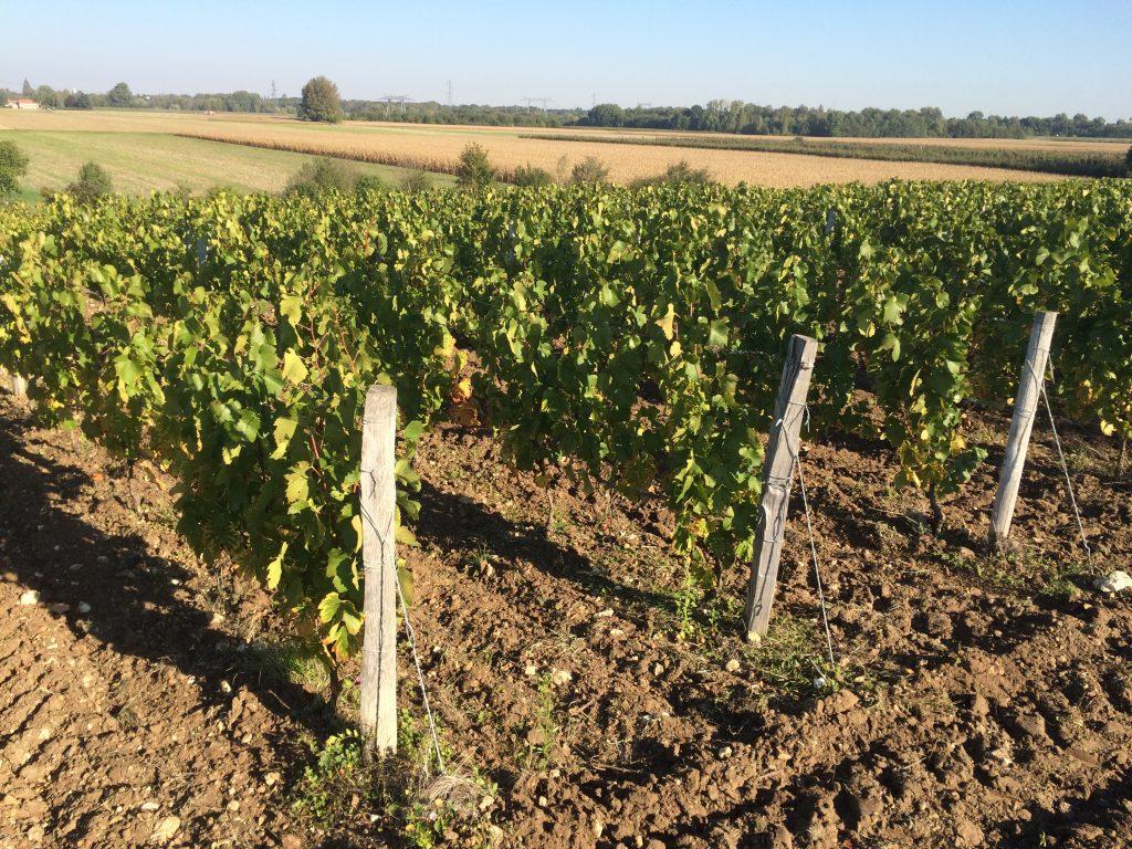 Les vignes de l'AOC Orléans aux portes de la Beauce by ni bu ni connu