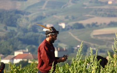 Le Beaujolais, un vignoble pas comme les autres