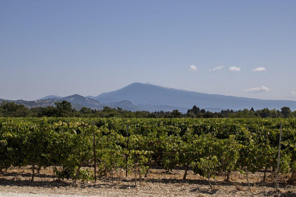 Les vignes de Montirius sous le regard du géant de Provence, le Mont Ventoux.
