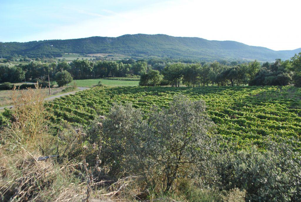 Parcelle de vignes du domaine Myrko Tepus