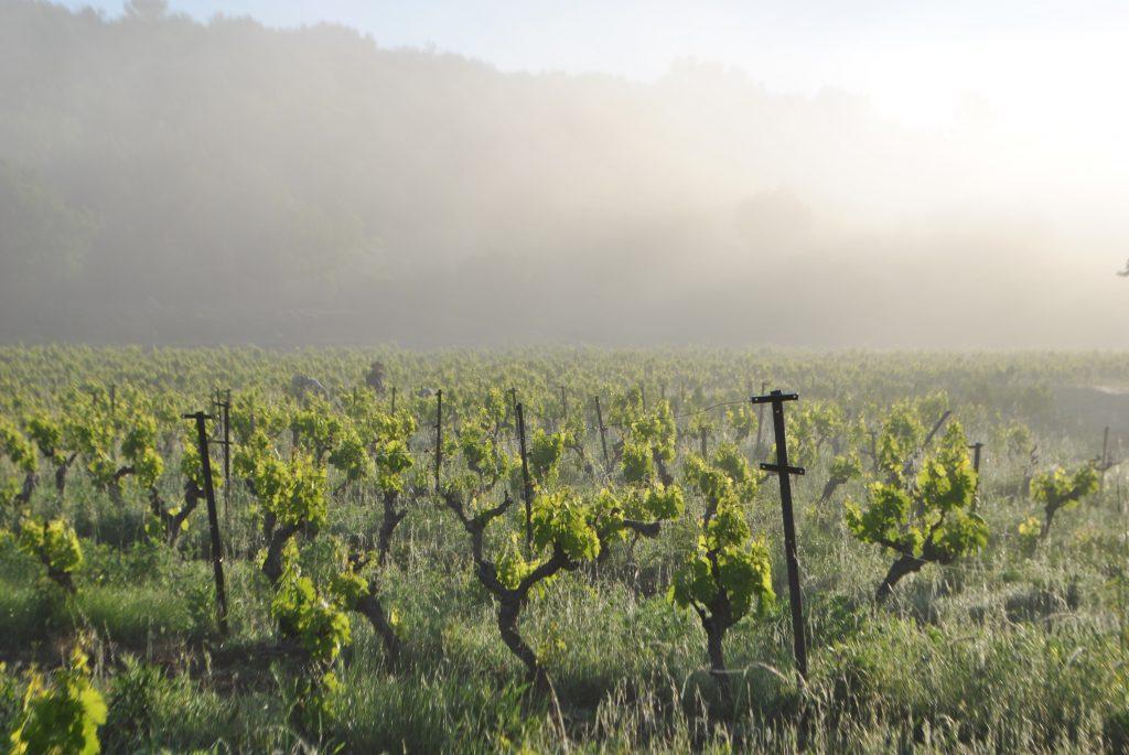 Le terroir d'Esparron, sous le brouillard
