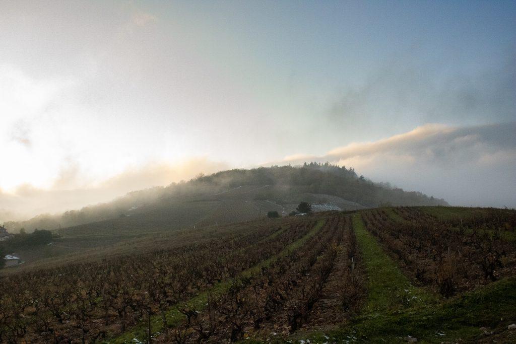 Le terroir de Philippe Viet, une journée de Novembre