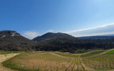 Le Bugey, la plus discrète des appellations de la Vallée du Rhône