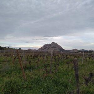 Le vignoble du domaine Giacometti