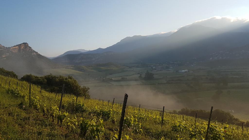 Le vignoble de Patrimonio, au nord de la Corse