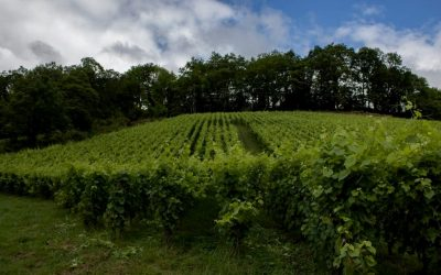 Irouléguy, un vignoble à l'autre bout de la France