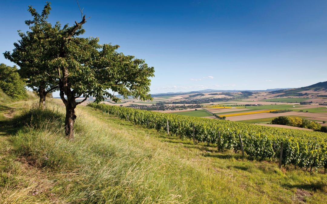 Côtes d'Auvergne, rendez-vous en terres volcaniques