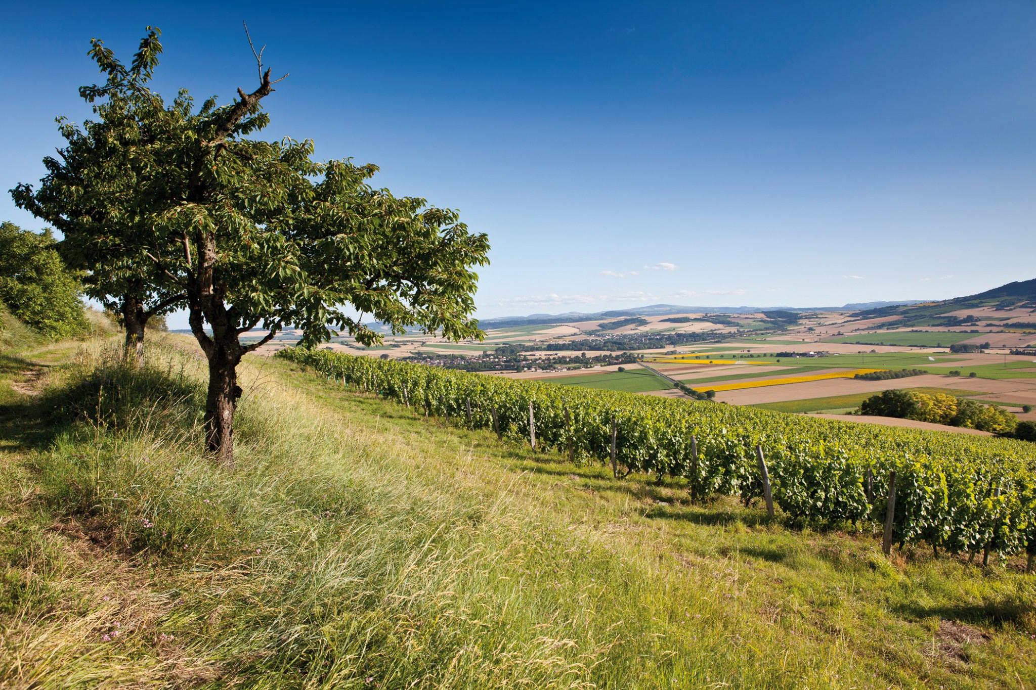 Paysage des Côtes d'Auvergne