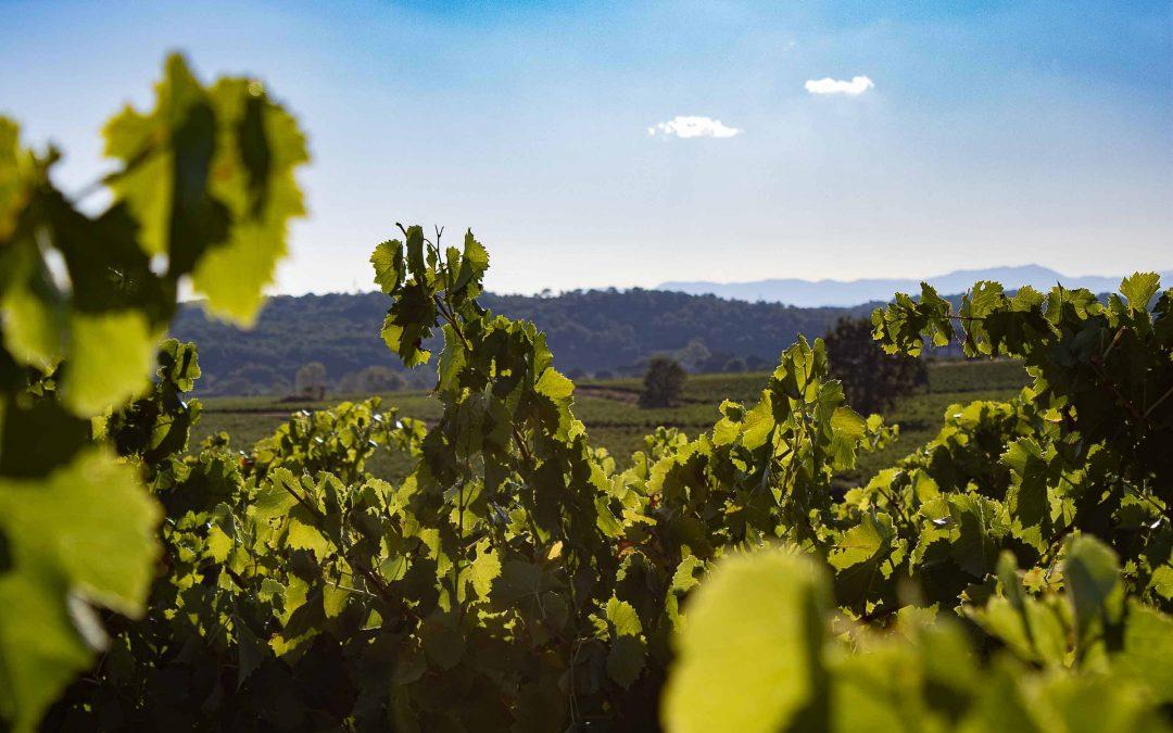 « Gard » à tes papilles, zoom sur le vignoble Cévenol