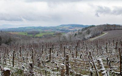 Vézelay, nouvelle appellation d'origine peu connue