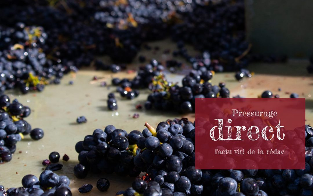 Pressurage direct de juin, l'actualité viticole du mois