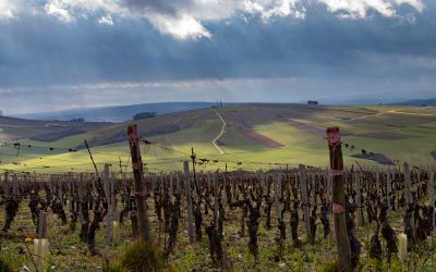 Le Grand Auxerrois, l'autre vignoble de la Bourgogne