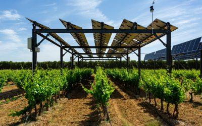 Viticulture et changement climatique