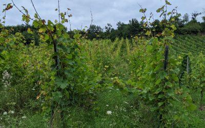 L'agriculture du vivant au Domaine Lissner